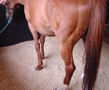 wood-pellet-horse-bedding
